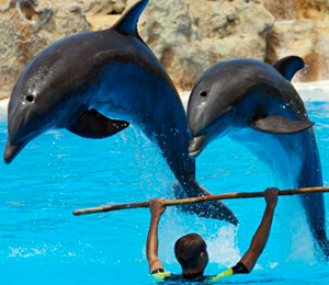 Bahamas Dolphin Trainer for a Day Programs