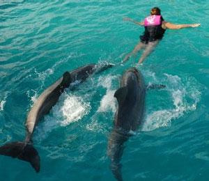 Nassau Bahamas Dolphin Programs