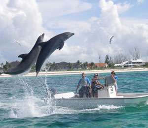 Dive with Dolphins in the Bahamas