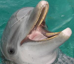 Aunty V the Dolphin