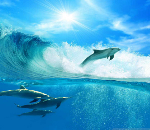 Conservation of the Dolphin Population