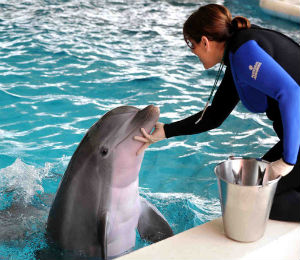 Requirements to Become a Dolphin Trainer