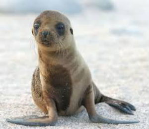 How People Have Affected Sea Lions