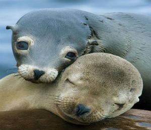 Learning From Sea Lions