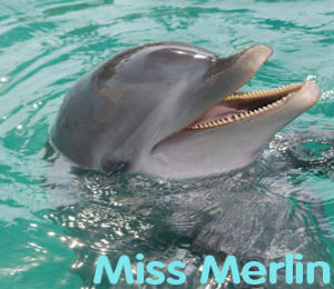 Miss Merlin the Dolphin