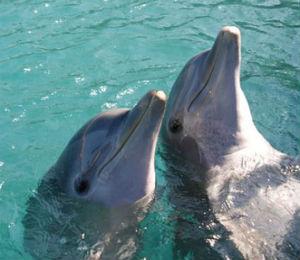 Nina the Dolphin