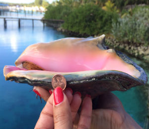 Blue Lagoon Gives Dish on Conch